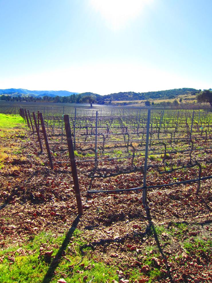 Foley Estates Vineyard & Winery