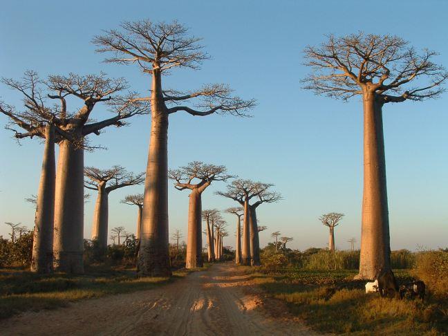 Madagascar087[1]