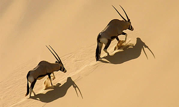 Photo credit: aardvarksafaris.com