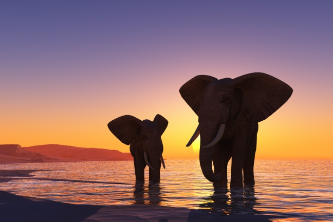 Elephants on the beach.